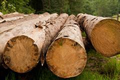 Felled trees Stock Photos