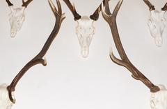 Deer Antler Trophies - stock photo