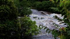 Rapid River in tropical jungle. Equatorial Guinea. Jungle. Stock Footage