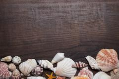 Different seashells on the brown wooden background Stock Photos