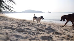 Two Funny Cheerful Dogs Playing on a Beach. Slow Motion - stock footage
