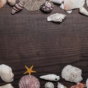 Different seashells over brown wooden background Stock Photos