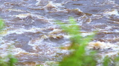 Tropical river floods the African jungle, close-up, Equatorial Guinea Stock Footage