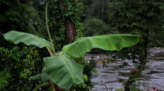View of the river through a banana leaf. Tropical Africa, Equatorial Guinea Stock Footage