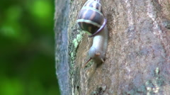 Supersonic Snail - Time-Lapse - stock footage