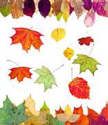 Fallen birch aspen maple and many autumn leaves Stock Photos