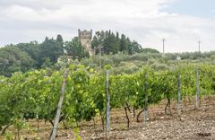Chianti, Tuscany, landscape at summer Stock Photos