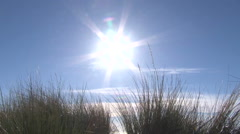 Sunny Ocean Dune Grass Blowing in Wind Stock Footage