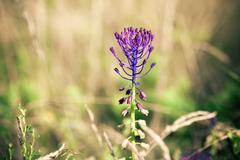 Medicinal wild spring flowers Stock Photos