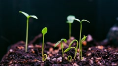 Plant growing fast Stock Footage