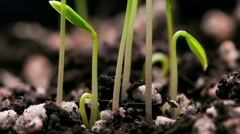 Green little plants growing Stock Footage