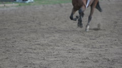 The horse runs gallop, slow motion 240,close-up of the hoof Arkistovideo
