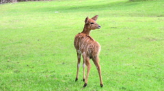 Young antelope standing in green grass 4k Stock Footage