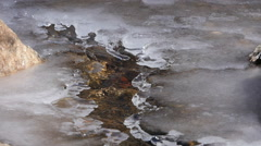 Ice covered stream Stock Footage