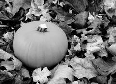 Ripe pumpkin among dry autumn leaves Stock Photos