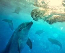 Underwater dialog Stock Photos