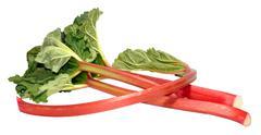 Freshly Picked Rhubarb Stalks - stock photo