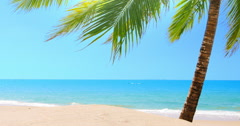 Sandy beach with palm tree on tropical island at sunny day with blue sky water Stock Footage
