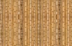 Bamboo background in vertical alignment Stock Photos