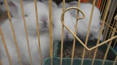 The cage white rabbit is eating the feed Stock Footage