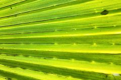 abstract green leaf in blur - stock photo