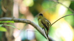 Bird on a branch Stock Footage