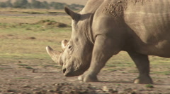 Extreme close up of a white rhino Stock Footage