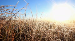 Frosty morning on the autumn meadow and grass in frost Stock Footage