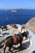 Fira Donkeys Stock Photos