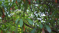Flowers exotic wood, Cerberus Stock Footage