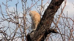 Cat on a tree Stock Footage