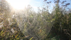 Stock Video Footage of dew on spider web