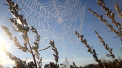 dew on spider web - stock footage