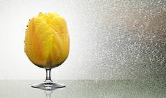 The glass in the form of a yellow Tulip. - stock illustration