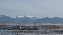 Seals long shot Southeast Alaska Stock Footage