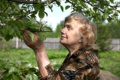 The old woman considers pear flowers Stock Photos