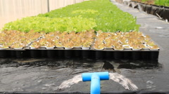 Hydroponics water system Stock Footage