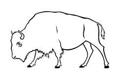 Buffalo Piirros