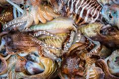 Fresh squid tray - stock photo
