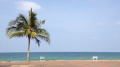 Coconut Tree and bench at the beach with Copy Space Area, loop - stock footage