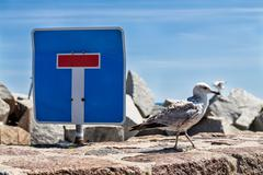 Sea gull and traffic sign - stock photo