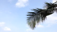 Coconut Tree midrib leaves Under Blue Sky And Morning Sun With Copy Space Area, Stock Footage
