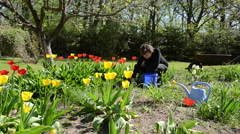 Woman look after tulip flower beds in spring garden. Arkistovideo