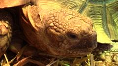 Head of giant tortoise Stock Footage