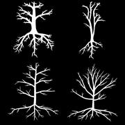 Trees with dead branches and roots - stock illustration