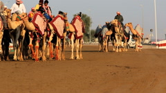 Dubai UAE camels Dubai racetrack sport racing animal Stock Footage