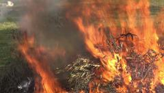 Burning Branches 3 Stock Footage
