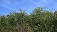 Birds singing Shark Valley Stock Footage