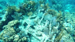 Underwater Coral Reef in Caribbean Stock Footage