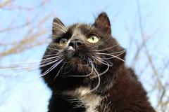 Black cat with white tie Stock Photos